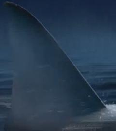 Airbus Sharklet - Shark fin